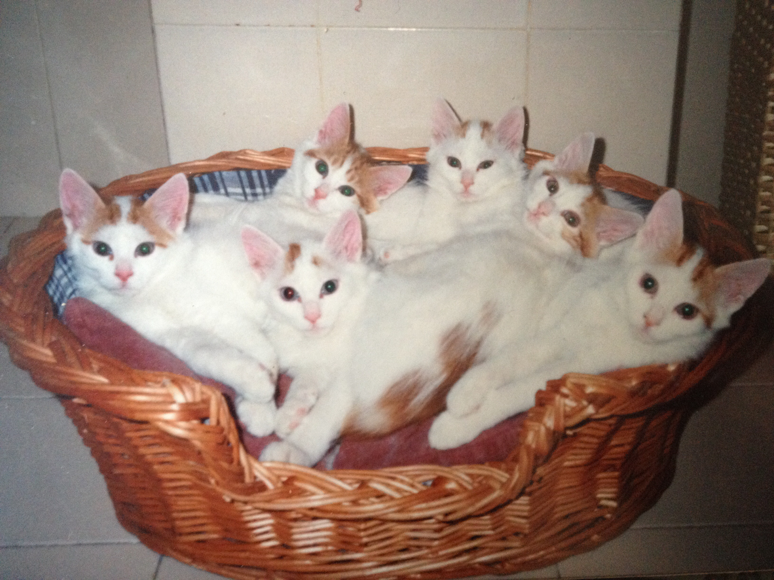 My first litter (1990)